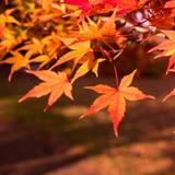 【秋に行くならココ】東京の秋観光で行きたいおすすめスポットを紹介!