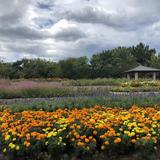 【海の中道海浜公園楽しみ方ガイド】お花畑から動物園まで大集合!広大な国営公園をとことん楽しもう