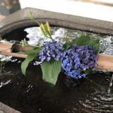 【雨の日も満喫】雨の日だからこそ楽しめる!祇園・東山の歩き方ガイド