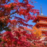 ここでしかできない体験を!京都でできる10のこと