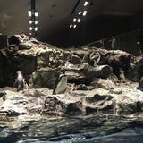 【すみだ水族館の楽しみ方完全ガイド】観光やデートにおすすめの情報や周辺情報も満載!