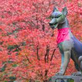 【秋の京都】定番から穴場まで!宇治・伏見の秋におすすめなスポットをご紹介!
