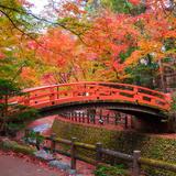 【秋の京都】紅葉巡り!金閣寺・上賀茂神社・龍安寺のおすすめスポットをご紹介