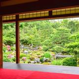 【雨の京都】濡れずに安心!金閣寺・上賀茂神社・龍安寺のおすすめスポットをご紹介