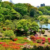 【六義園の楽しみ方完全ガイド】都会で桜や紅葉を贅沢に味わえる!周辺情報も満載