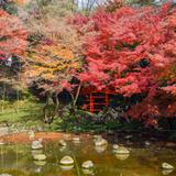 【小石川後楽園の楽しみ方完全ガイド】歴史ある都立庭園で四季折々の草花を楽しむ!