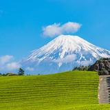 【静岡県観光スポット紹介】動物や自然に触れ合えるスポットから絶景スポットまでおすすめスポット30選