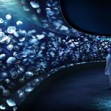 サンシャイン水族館に新たな展示エリア「海月空感」が2020年4月オープン!圧倒的な没入感を体験できる