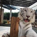 岡山の池田動物園は今年で開園67周年!入園料の半額サービスや来園プレゼントなどイベント満載