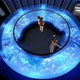 京都水族館リニューアル後のオープンが決定!西日本最多となる約20種5,000匹のクラゲを展示する新エリア誕生