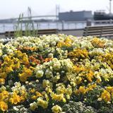 """60万本の花々が美しく彩る「ガーデンネックレス横浜2020」春の陽気の下で""""癒やし""""のひとときを"""