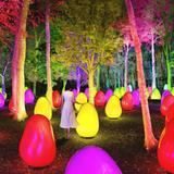 武蔵野樹林が光のアート空間に!「チームラボ どんぐりの森の呼応する生命」2020年8月1日オープン