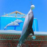 しながわ水族館にて人気のイルカショー・アシカショー・アザラシショーが再開!