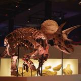 トリケラトプスの実物全身骨格が日本初上陸!「パシフィコ横浜」で科学視点からの新しい恐竜展開催