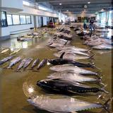 日南市漁協本所