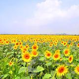 デートや家族連れにオススメ!岡山県笠岡市で花を巡る休日。