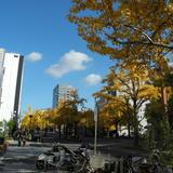 桜通は桜の名所