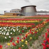 新潟市食育・花育センター【チューリップの名所】