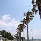 トロピカルな海岸