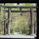 茅部神社の大鳥居