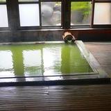 志賀高原 熊の湯