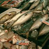 野田鮮魚店