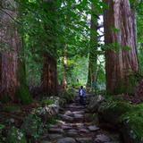 瀧尾神社の参道