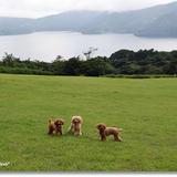 富士芦ノ湖パノラマパーク