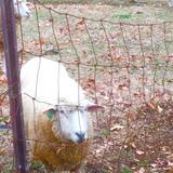 めん羊の里木里館