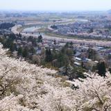 桧木内川桜並木
