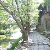 八幡川緑地