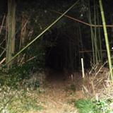 シガイの森