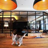 猫カフェモカラウンジ 池袋東口店