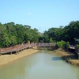 川満マングローブ