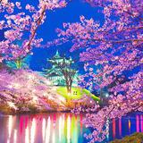 悠久山公園【桜の名所】