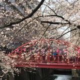 東横線沿いを巡る春の歩きまくり食べまくりお花見デート【中目黒/祐天寺/三宿/横浜】