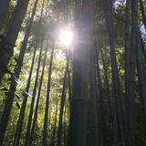 鎌倉から江ノ島までのぶらりお散歩