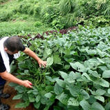 農家民宿 新助