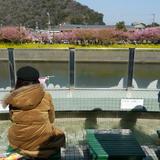 河津三郎の足湯処
