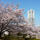 横浜汽車道