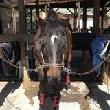 明石乗馬協会