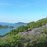 亜熱帯作物支場〜トロピカルドーム・ジャカランダの森〜