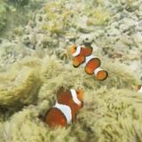 ヤドリ浜自然海水浴場