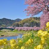 みなみの桜と菜の花街道