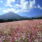 花の駅 生駒高原