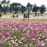 宮崎県農業科学公園ルピナスパーク