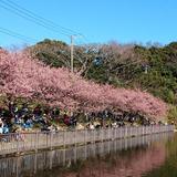小松ケ池公園