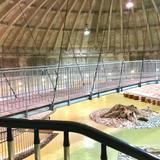 魚津埋没林博物館