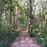 野火止緑地総合公園 野鳥の森