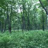 十勝千年の森